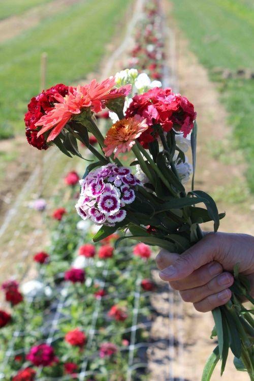 p&D flowers