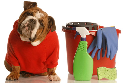 Image for Keeping Your Spring Cleaning Pet-Friendly