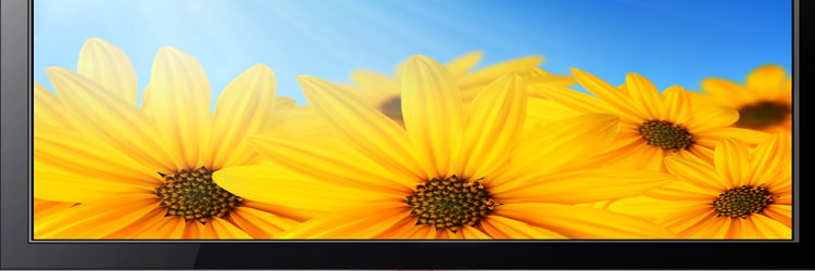 TV screen with flowers