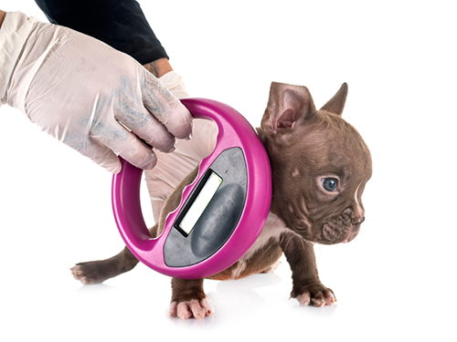 Image for Microchipping and ID Tags for Pet Safety