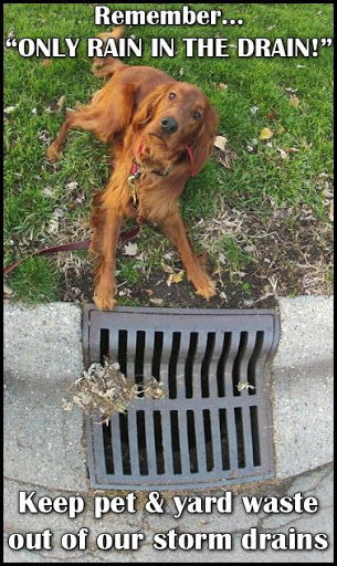 Only rain in the drain image of a dog