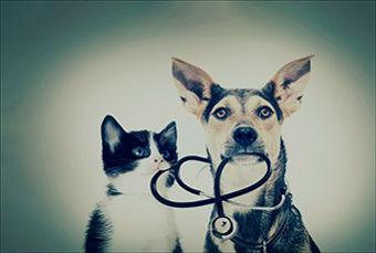 Image for Pet Insurance: Good idea?