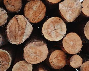 Design & Drink: Tree Wood Style