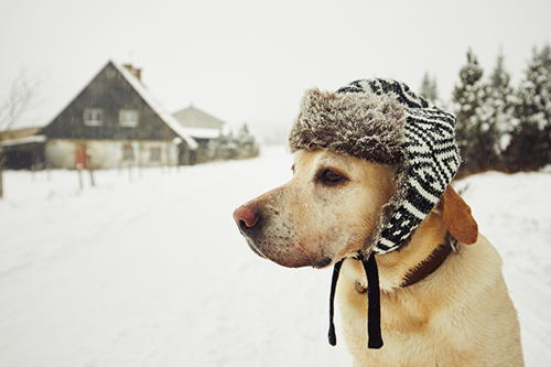 Image for 7 Ways To Keep Dogs Warm In Winter