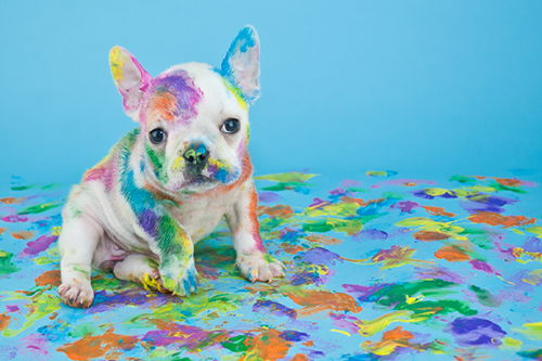 Image for Household Products That Could Harm Your Pet
