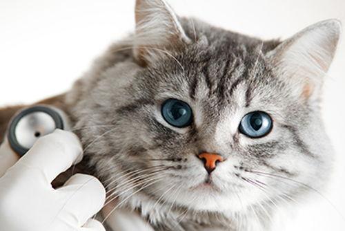 Image for Should I Get Pet Health Insurance
