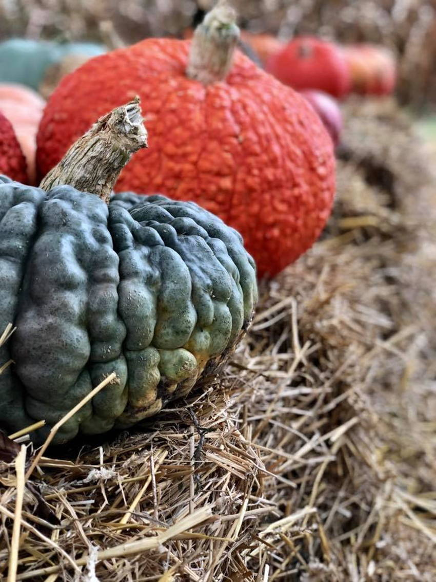 Harvest Adventures at Dougherty Family Farms