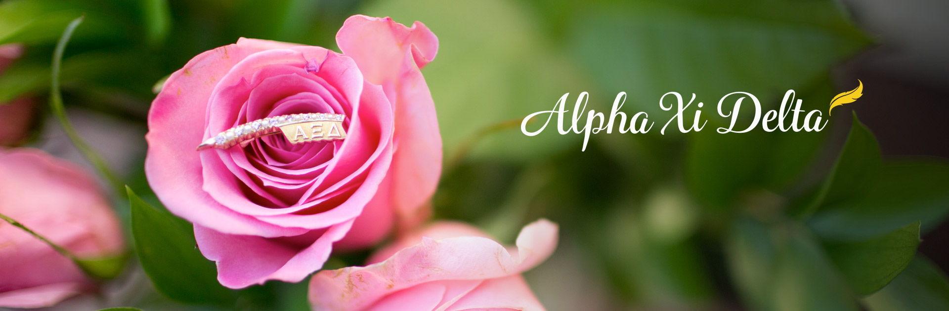 Alpha Xi Delta Banner