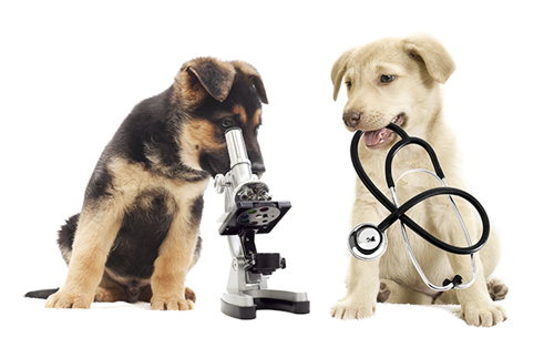Image for Animals and Humans at Risk: Why Your Vet Checks for Parasites