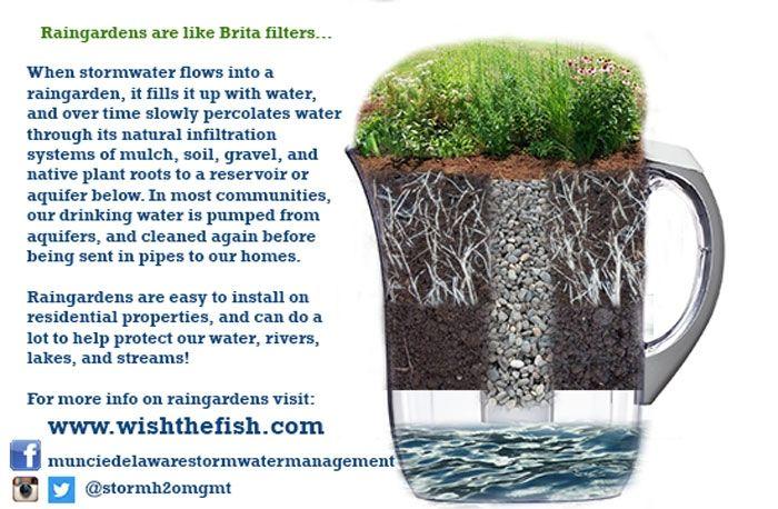 Rain gardens are like Brita filters image