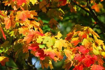 Community Fall Celebration