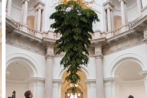 Image for Upside Down Christmas Trees?