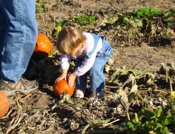 Fall Harvest Festival at Waterman's Family Farm