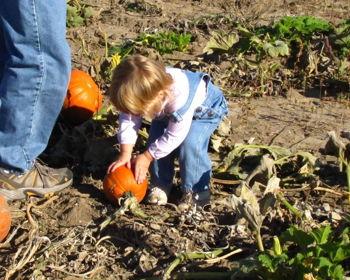 Fall Harvest Festival at Waterman's Family Farm