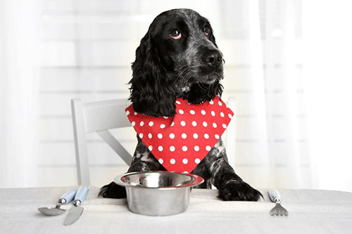 Image for Is a Raw Food Diet Healthy for My Dog?