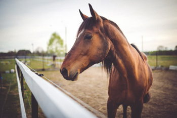 Hoosier Horse Park Events