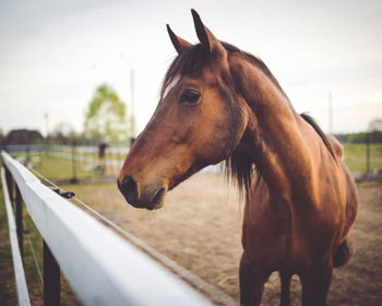 Hoosier Horse Park Events