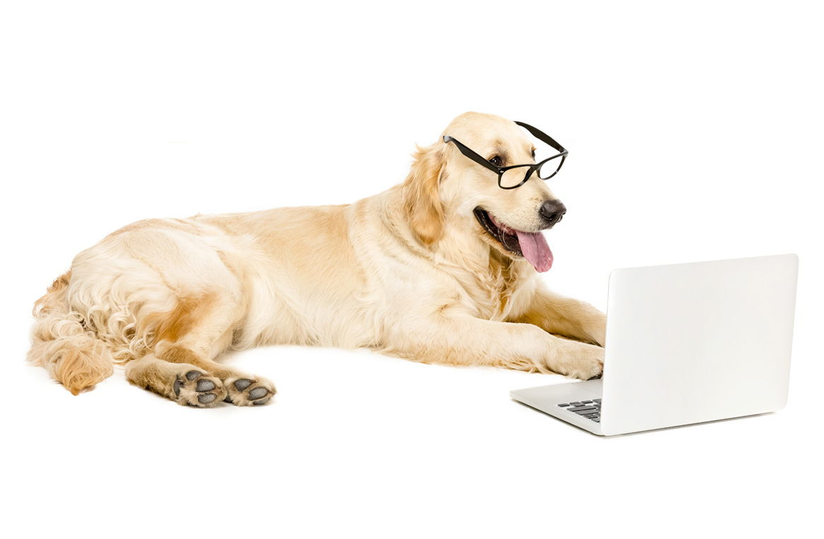 Image of a dog holding an tablet