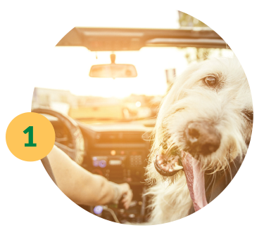 Driving in Car With Dog - Auto Refinance