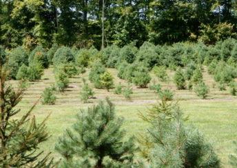 Emmanuel Tree Farm
