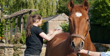 Image for Equine Massage Course