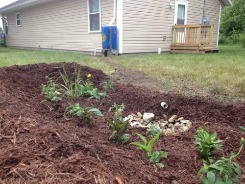 Habitat Rain Garden image