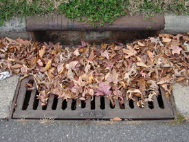 Image of leaves on a storm drain