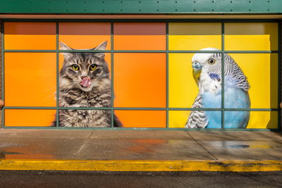 Colorful Pet Window Graphics