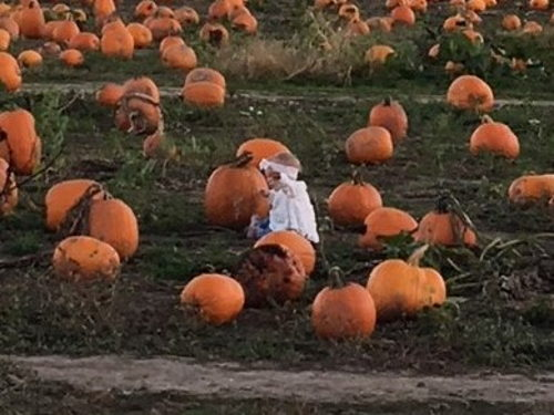 Image for Finding The Treasured Pumpkin