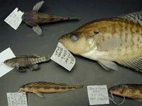 Fish Community Assessments image