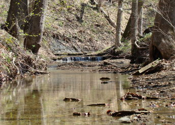 Laura Hare Preserve at Blossom Hollow