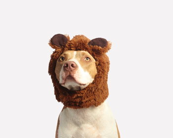 Howl-O-Ween Costume Contest for Dogs