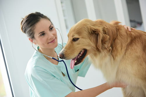 Image for Cardiac Problems in Cats and Dogs