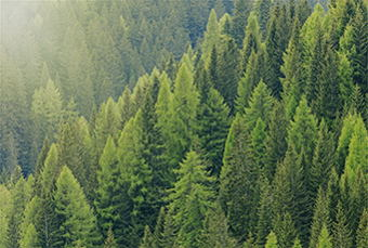Image for Timber Investing: A Valid Long-Term Growth Strategy?