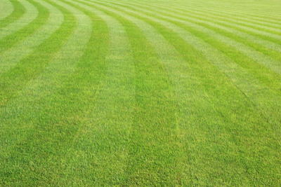 Image of mowing lines in grass