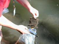 Aquatic Insect Assessments image