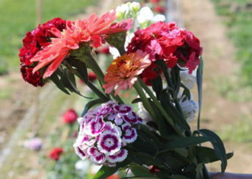 P&D U-pick Flower Farm