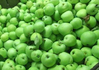 Whiteland Orchard