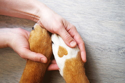 Image for How to Prevent Common Nail and Paw Problems