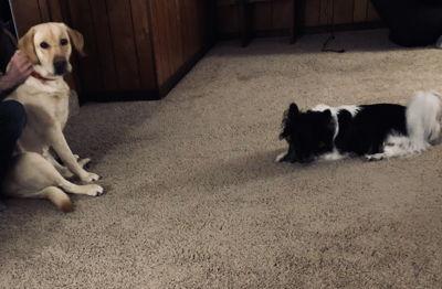 I | Zoey & Kuma
