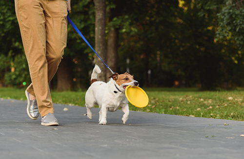 Image for How To Know If Your Dog Needs Longer Walks
