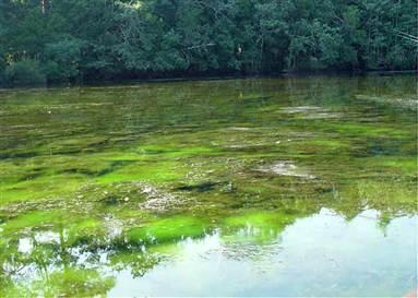 Algal Blooms image