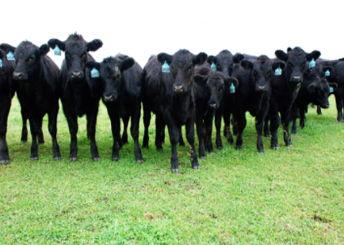 Dougherty Farm Fresh Beef