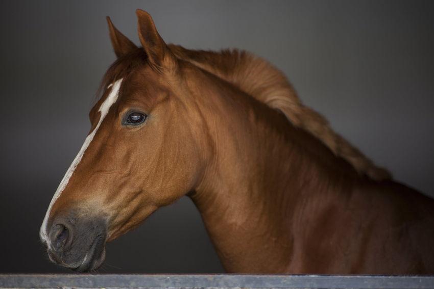 Hoosier Horse Park