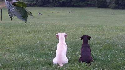 R | Dixie & Belle