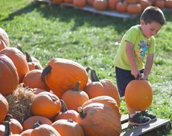 child in a pumpkin patch