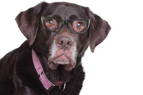 Image for Adopting  a  Senior  Pet