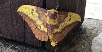 Image for Moth Mania